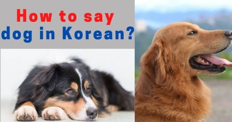 How do you say dog in Korean & puppy in Korean?